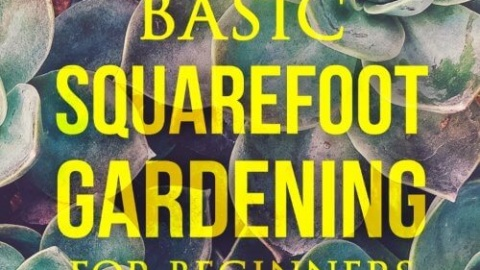 Basic Square Foot Gardening for Beginners