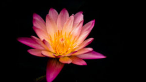 Beyond Meditation